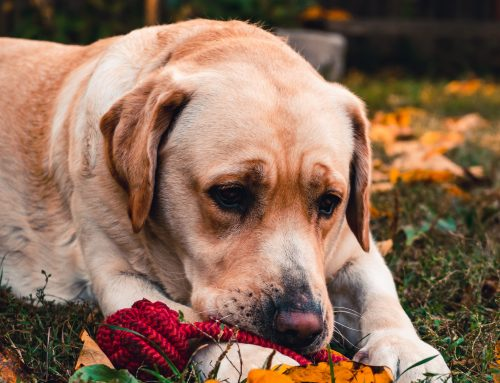 How Do I Know If My Pet Is In Pain?
